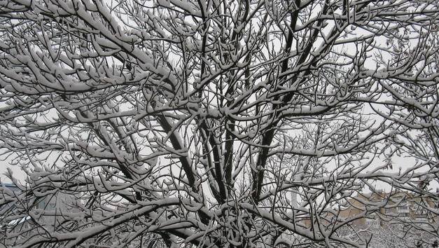 По западу Беларуси мокрый снег