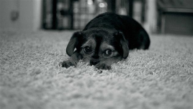 Эксперименты подтвердили способность собак чувствовать «запах страха»