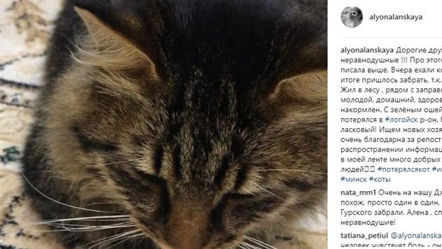 Алена Ланская подобрала на улице кота и ищет ему хозяина