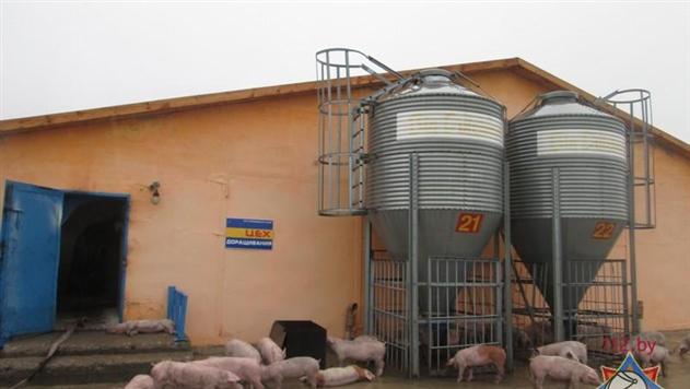 Беларусь ограничивает ввоз свинины из Украины, Польши и Латвии