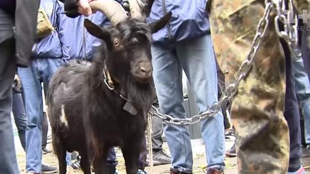 Под посольство Чехии в Киеве привели козла