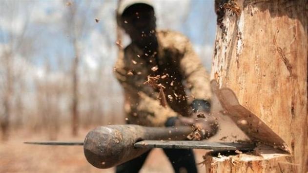 В Житомирской области «черные лесорубы» напали с оружием на лесников