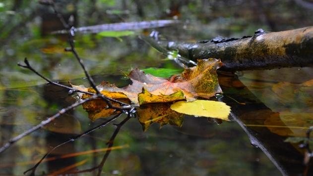29 и 30 октября в Беларуси ожидаются порывистый ветер и сильные дожди