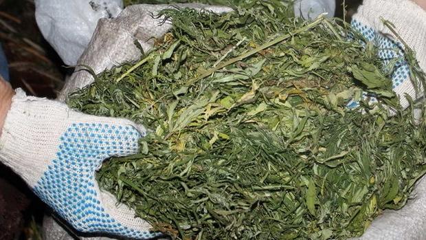 В Беларуси собирают подписи за легализацию марихуаны