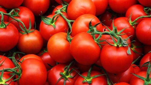 Россия вернет в Беларусь 40 тонн турецких томатов и кабачков