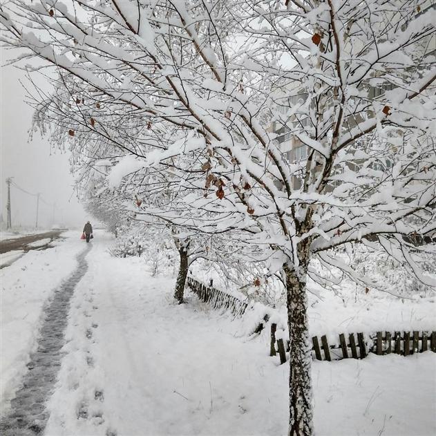 Могилевчане делятся в соцсетях фотографиями заснеженного города