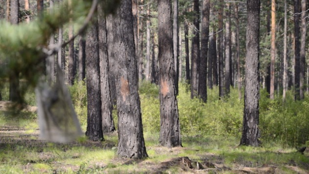 В Минске спасатели освободили мальчика, застрявшего между деревьями