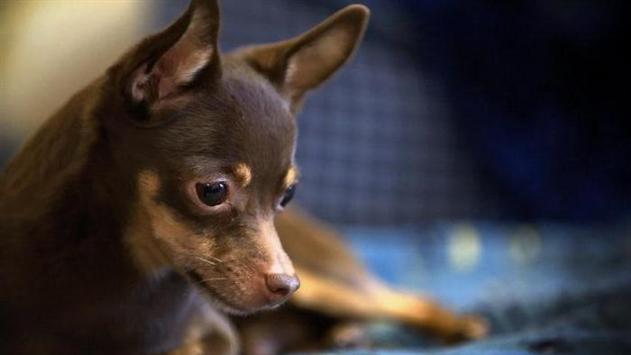 Пьяный минчанин убил собаку, пытаясь спасти ее от холода