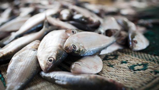 В Минске вскрыли схему «серой» поставки рыбы в Россию