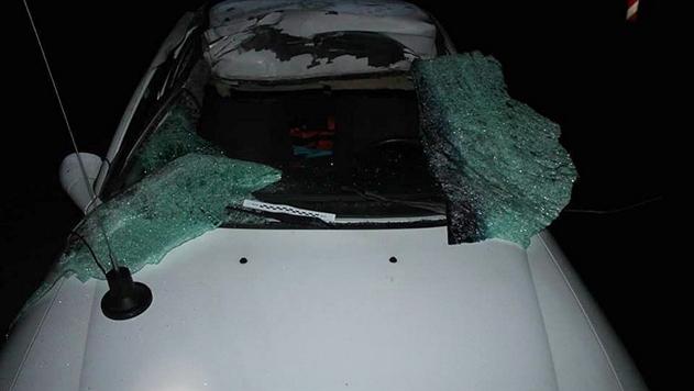 В Ивьевском районе автомобиль столкнулся с лосем: погиб человек