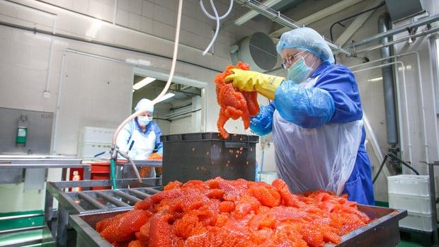 Россия ограничивает ввоз морепродуктов «ВИТЕБСКРЫБА» и «Белрыба»