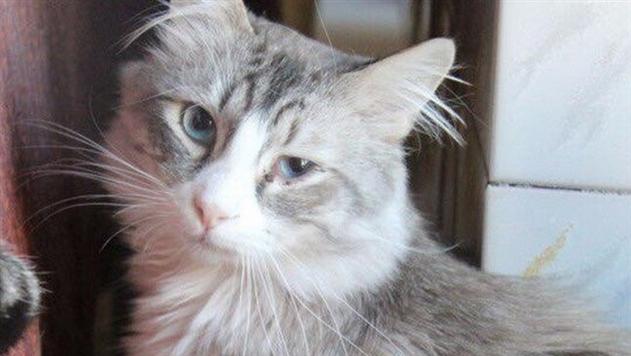Сбежавшего в минском аэропорту кота нашли … мертвым