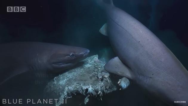 Атака ревущих акул на субмарину журналистов попала на видео