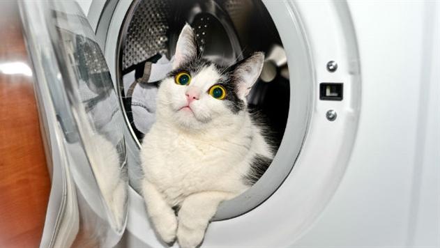 В Норвегии хозяин случайно постирал кота: он чудом выжил