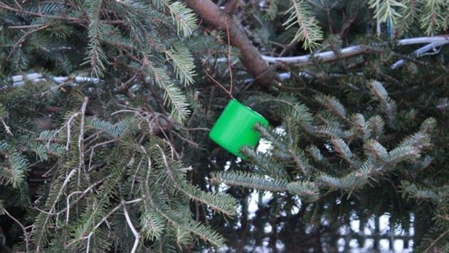 В Давид-Городке главную елку украсили детскими тапками и ведрами - фото