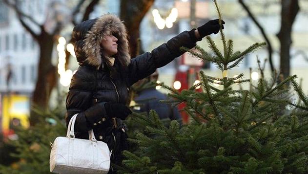 Елочные базары откроются 22 декабря: лесхозы уже заготовили 180 тыс. елок
