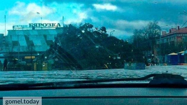 Фотофакт. Ветер повалил новогодние елки в двух городах Гомельщины